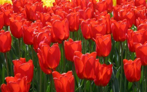 محلول های محافظ گل