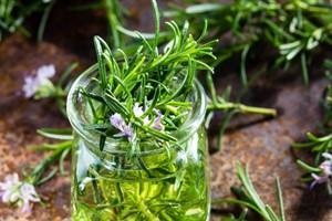 گیاه رزماری را چقدر می شناسید؟