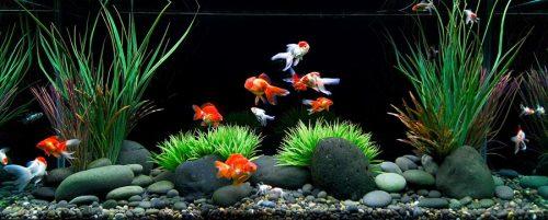 جا به جایی ماهی های آکواریومی