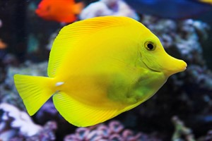 ماهی های آکواریومی و نحوه جابه جایی آن ها