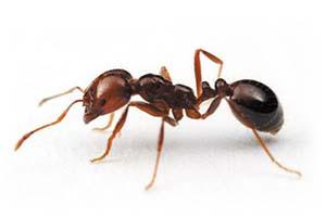 مورچه و زندگی شگفت انگیز این موجود کوچک