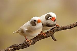 پرندگان مناسب برای کودکان را می شناسید؟