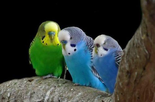 پرندگان مناسب برای کودکان