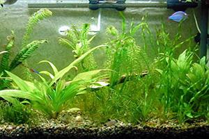 گیاهان اکواریومی و هرآنچه که باید بدانید