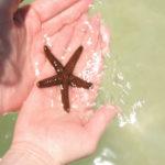 ستاره دریایی چگونه موجودی است؟