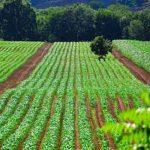 رشته مهندسی کشاورزی و آینده های شغلی این رشته
