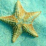 ستاره دریایی چگونه موجودی است؟ + تصاویر زیبا