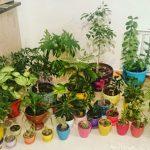 چگونگی کود دادن به گیاهان خانگی