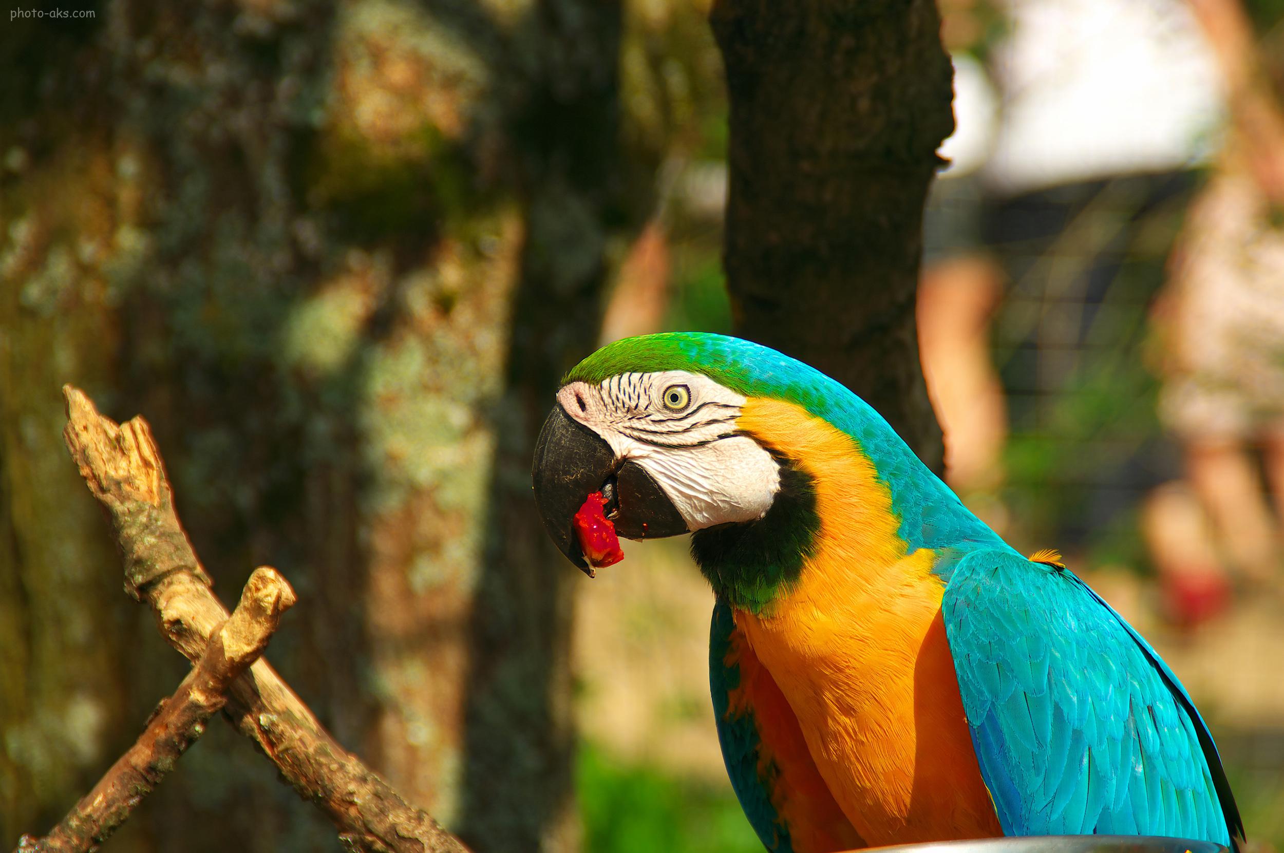 بیماری پرندگان چه علائمی دارد؟