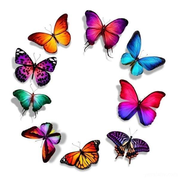زندگی پروانه ها