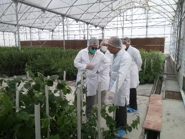 رشته مهندسی کشاورزی گرایش گیاه پزشکی را بشناسید