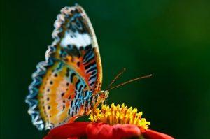 با زندگی شگفت انگیز پروانه ها آشنا شوید