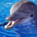 دلفین ها را بهتر بشناسید