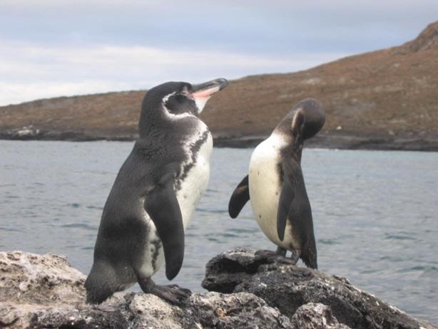 انواع پنگوئن