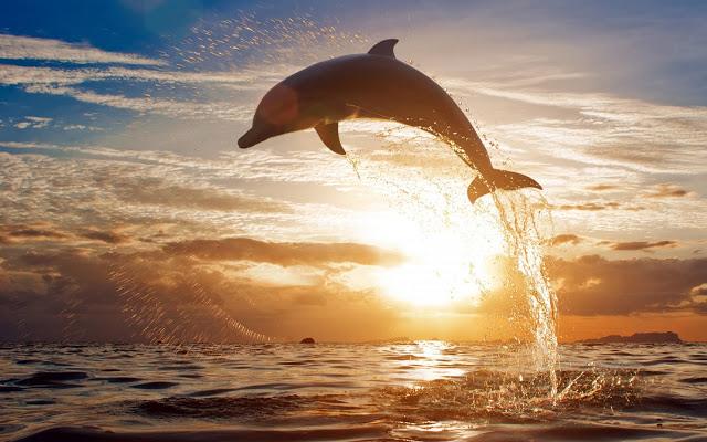 زندگی دلفین ها