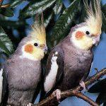هرآنچه که درباره نگهداری پرنده عروس هندی نمیدانستید
