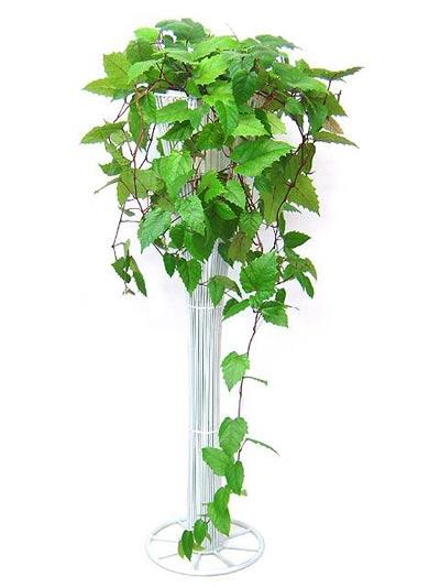 پرورش و نگهداری گل پیچ کانگرو