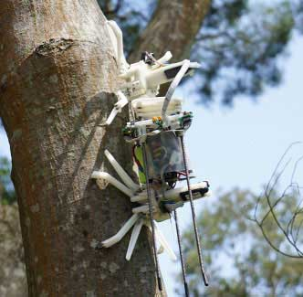 طراحی رباتی خزنده برای بالا رفتن از درخت!