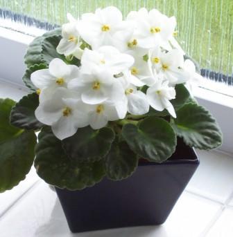 زیباترین گیاهان آپارتمانی که به خانه شما جلوه خاصی میدهند