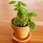 زیباترین روش ها برای نگهداری گل و گیاه در داخل آپارتمان