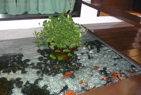 طراحی حوض و نحوه نگهداری از ماهی ها