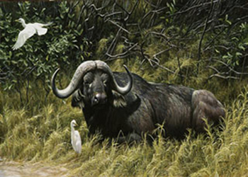 آشنایی با خطرناک ترین جانوران زمین