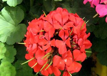 دانستنیهای نگهداری و مراقبت از گلهای خانگی در فصل سرما