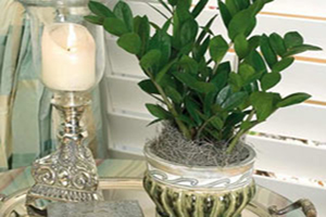 با گل زامیفولیا و نحوه نگهداری از آن آشنا شوید