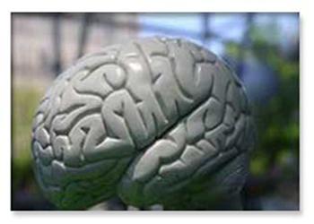 عمر طولانی تر مستلزم داشتن مغز بزرگتر