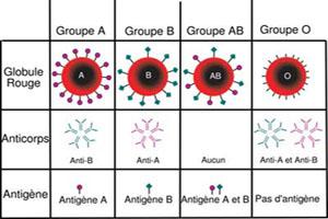 گروه خونی خود را بدانید شاید جزو نادرها باشید