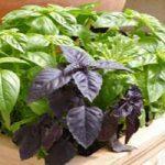 با ۱۰ تا از بهترین سبزی های خوراکی از گلدان خانه تا درون غذا آشنا شوید