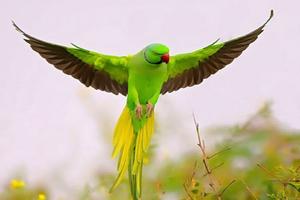 همه چیز درباره پرندگان