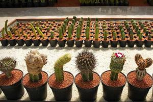 حقایقی خواندنی درباره گیاه کاکتوس