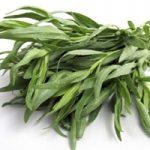 اطلاعاتی کامل درباره گیاه ترخون