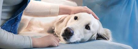 عقیم سازی حیوانات خانگی
