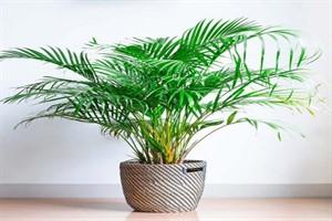 برای درمان استرس از این گیاهان خانگی استفاده کنید