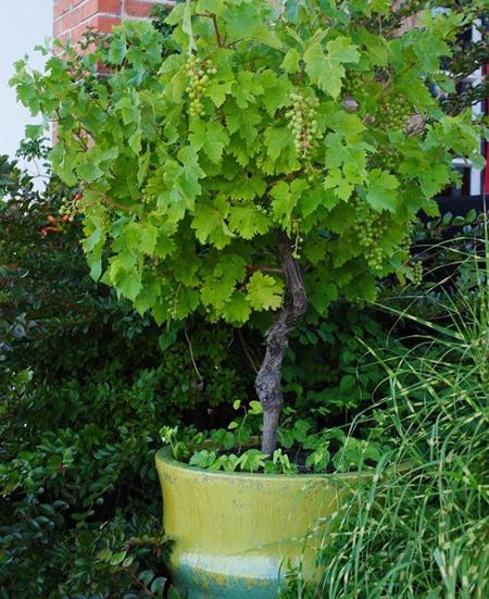 پرورش درختان میوه گلدانی