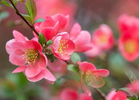 گل های بهاری
