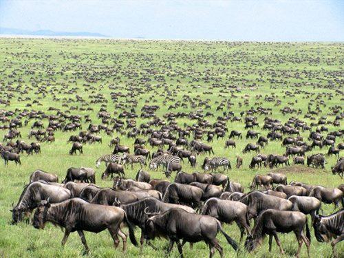 مهاجرت جانوران