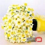 با شرایط کاشت و نگهداری از گل نرگس آشنا شوید