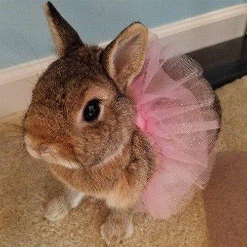 نگهداری از خرگوش در خانه