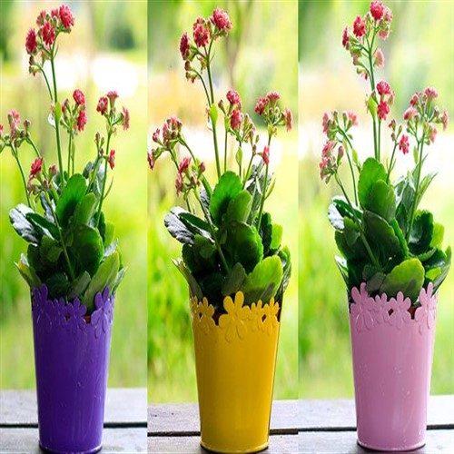 اصول نگهداری گل های آپارتمانی
