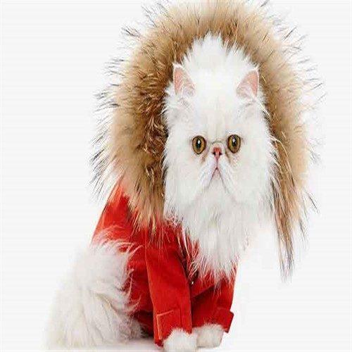 مراقبت از حیوانات در زمستان