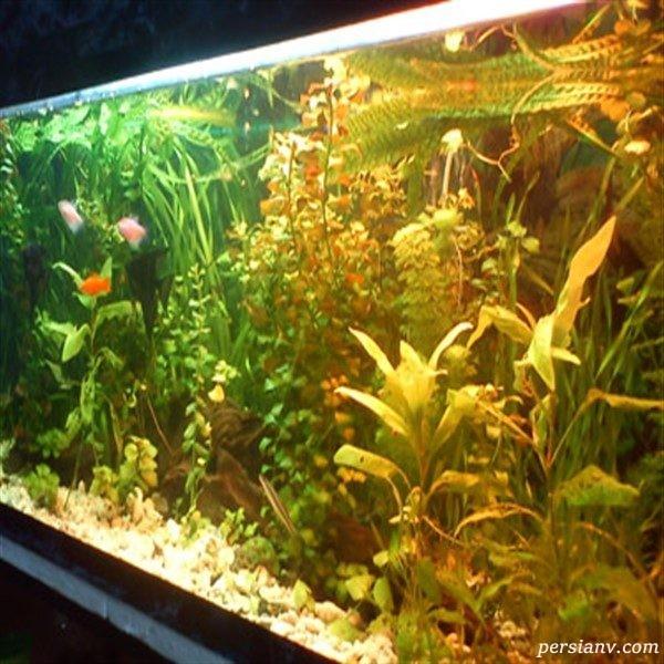 با آکواریوم های گیاهی آشنا شوید