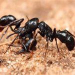 راه های از بین بردن مورچه در خاک گلدان