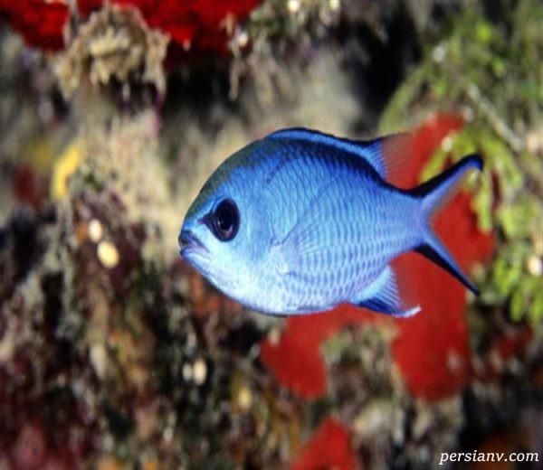 آیا ماهی ها احساس دارند؟