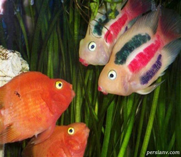 ماهی ها احساس دارند
