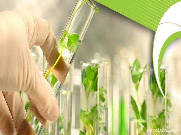 رشته تکنولوژی تولیدات گیاهی