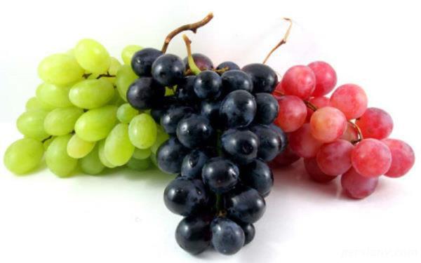 خواص ضد سرطانی انگور