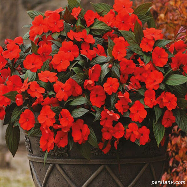 زمان گل دادن گیاه